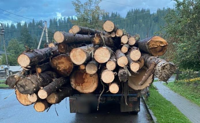У Вижницькому районі поліцейські викрили крадіжку лісодеревини